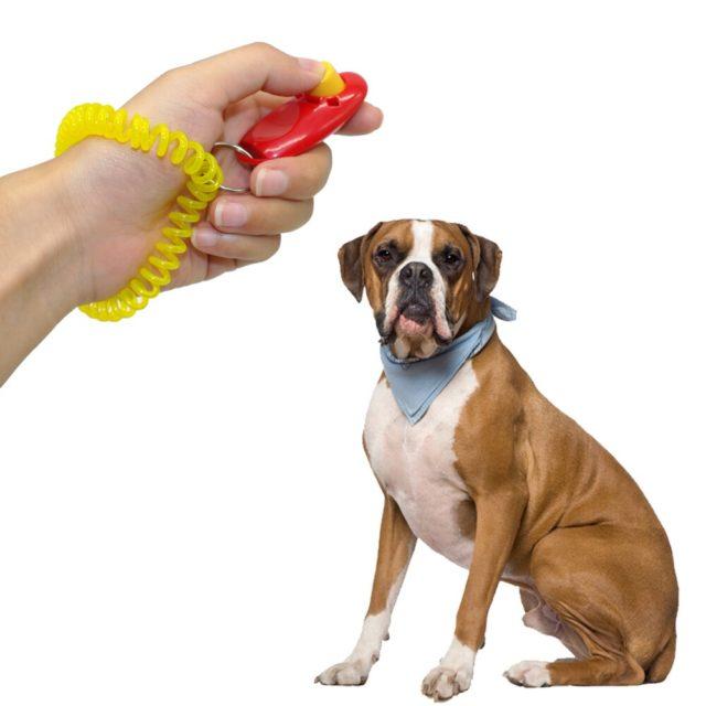 Dog's Training Clicker