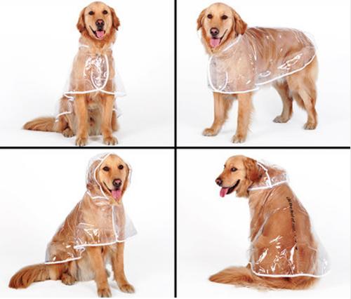 Transparent Autumn Dog Raincoat