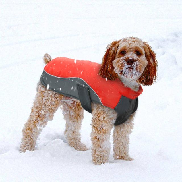 Waterproof Dog's Vest Jacket